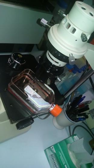 Cells under Microscope