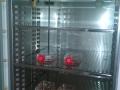 Cell Incubator