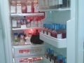 Fridge with Cell Culture Media